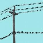 Birds on wire 4