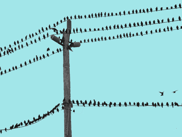 15: Birds on a Wire | Paul D\'Angelo