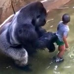 gorilla-and-child-1